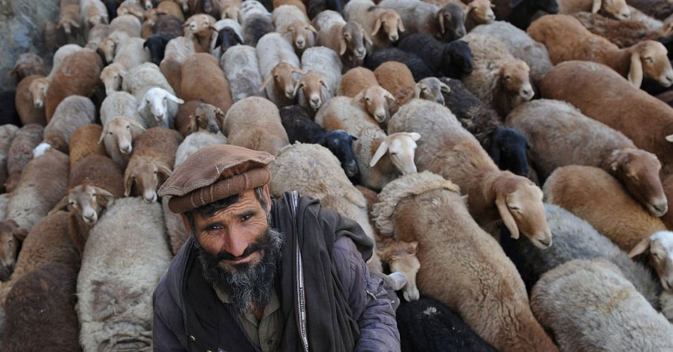 Lessons of the Shepherd