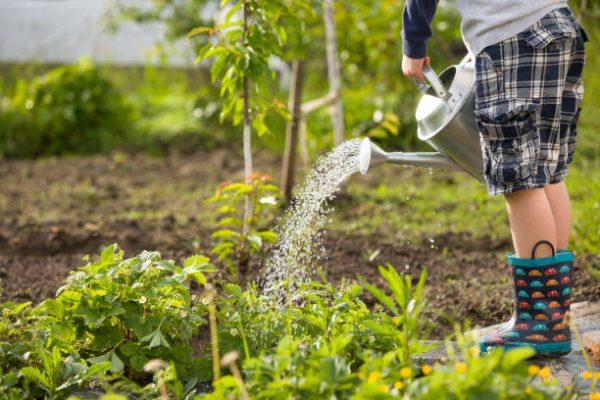 Gardening in lockdown